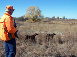 kansas guided pheasant and qual hunting